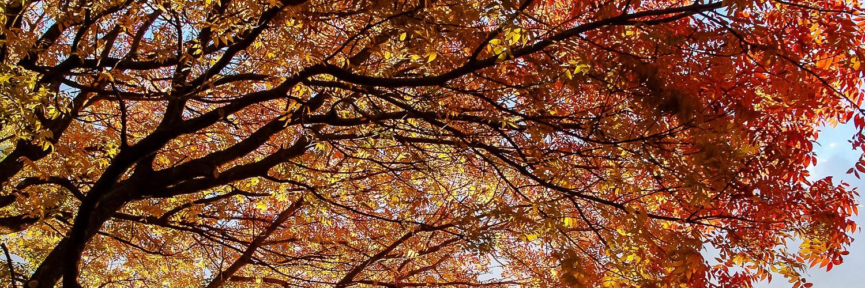 Armidale Autumn Colour